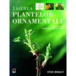 Tăierea plantelor ornamentale. Un ghid pas cu pas pentru tăierea plantelor de grădină
