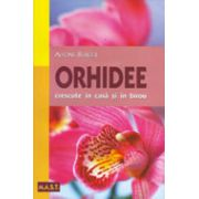 Orhidee crescute în casă şi în birou