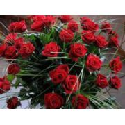 Rote Rosen  ( set 3 CD)